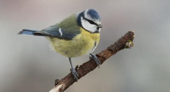 Bli med på telling av fuglar!